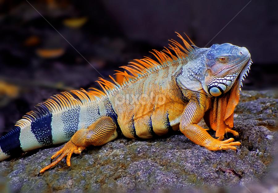 by Asher Jr Salvan - Animals Reptiles