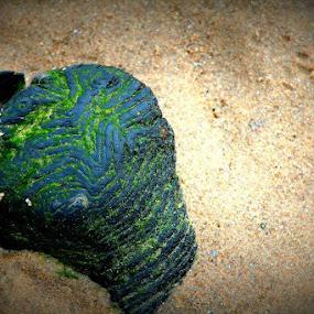 by Cheryll Duckworth - Nature Up Close Rock & Stone