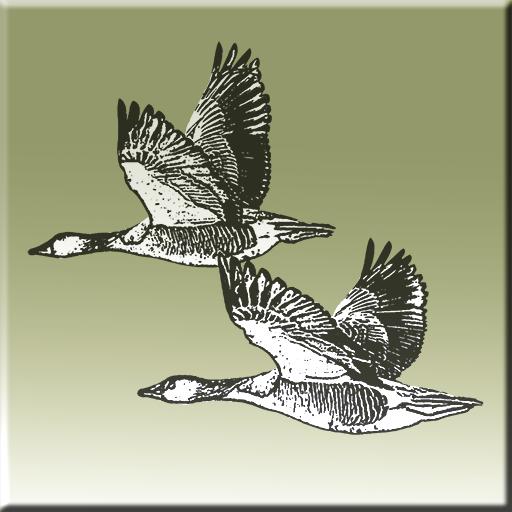 Birding diary Europe