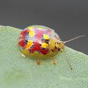 Glorious Leaf Beetle