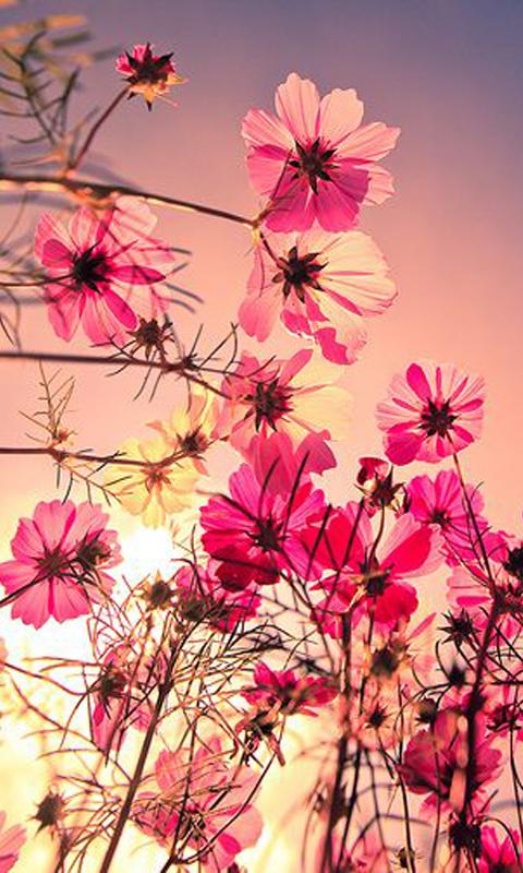 Fantastic Flower Wallpaper HD Android Apps on Google Play