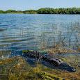 Herpetofauna of Florida