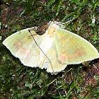 Predation? Moth + Harvestman