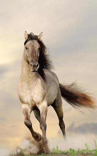 馬匹動態壁紙