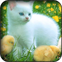 White kitten wallpapers icon