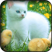 White Kitten Wallpapers