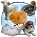 Baby Animals Sound Quiz! icon