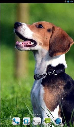 Beagle Theme - Nova ADW GO