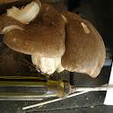 Platterfull mushroom