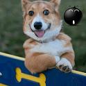 Fungifa - Very Funny GIFs icon