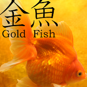 Gold Fish 3D free LWP