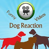 Dog Reaction Videos