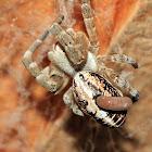 Velvet Spider and ???