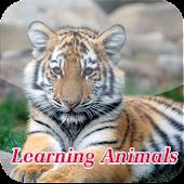 Kids Animal Learning