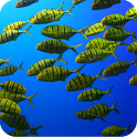 The shoal of fishes icon