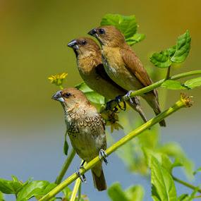 Triple........ by RIO DJOENED - Animals Birds