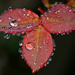 by Simon Yue - Nature Up Close Natural Waterdrops
