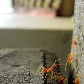 ants by Amal Vs - Instagram & Mobile Other ( pathway, ants, ant )