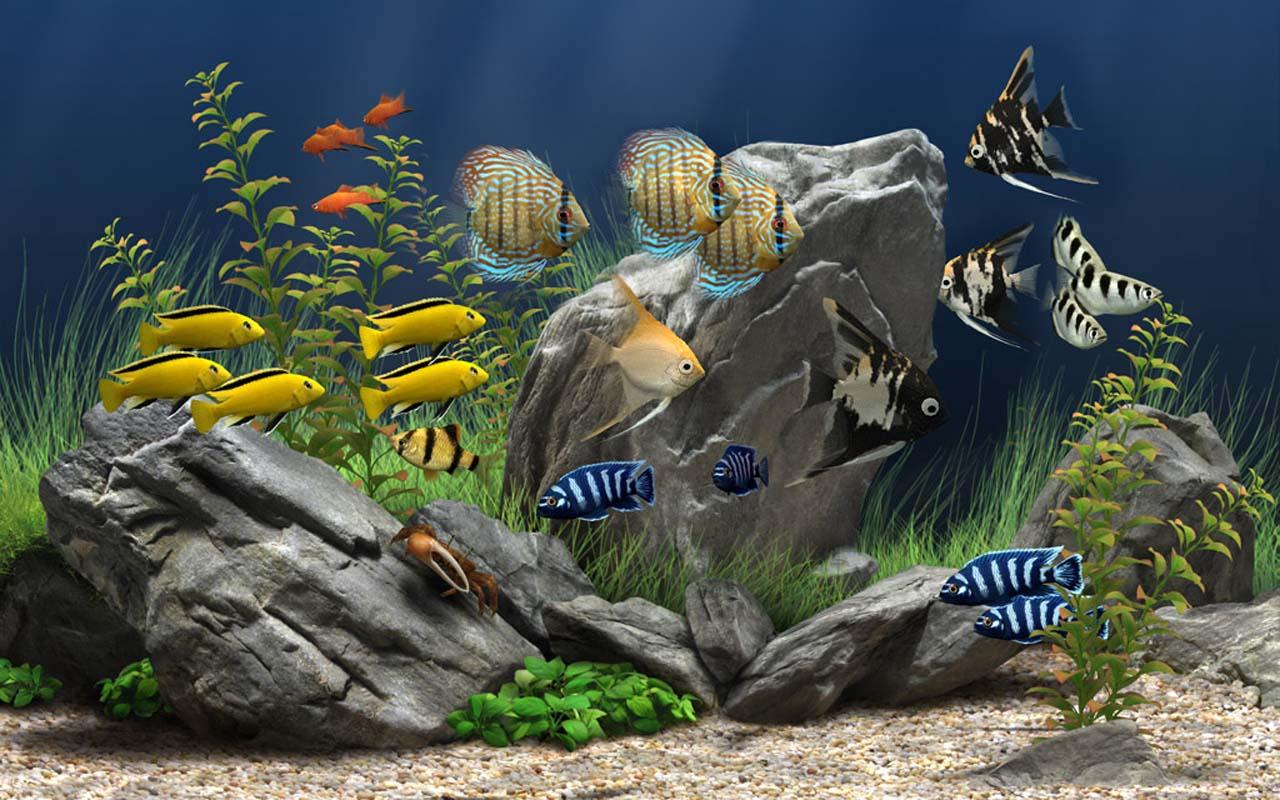 5D Marine Aquarium Theme   Android Apps on Google Play