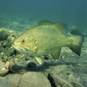 Arkansas Fishing Guide