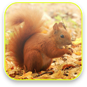 Little Squirrel 3D Wallpaper icon