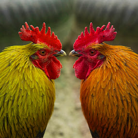 TWINS by Gjunior Photographer - Animals Birds ( portrait animal, , #GARYFONGPETS, #SHOWUSYOURPETS )