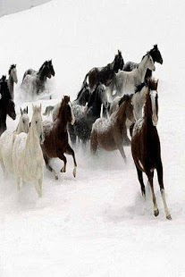 Horse images wallpaper - screenshot thumbnail
