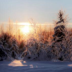 winter light by Elisabeth Johansson - Nature Up Close Trees & Bushes ( winter, cold, snow, trees, light, sun,  )