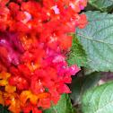 Flower+grasshopper