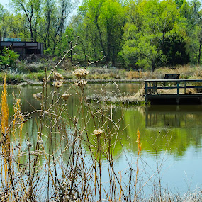 Early spring by Beckie Caughman - Landscapes Waterscapes ( water, nature, trees, pond, dock,  )