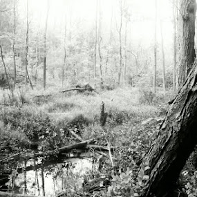 the forest after Irene.. by Bharath Iyer - Nature Up Close Other Natural Objects