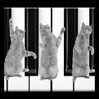 Cat Piano