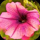 Fondos de Flores HD Gratis icon