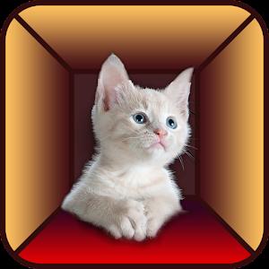 Cat Simulator for PC and MAC