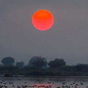 flamingos with sunset by Vijayendra Desai - Animals Birds ( nalsarovar, nature, surat, vijayendra )