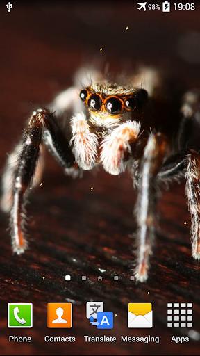 蜘蛛动画壁纸