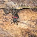 Bee-killer Bug