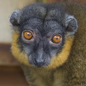 Beauty by John Dutton - Animals Other Mammals