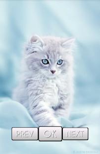 Cute cat wallpaper hd android apps on google play cute cat wallpaper hd screenshot thumbnail voltagebd Gallery