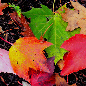 So many kinds of leaves out here! by Liz Hahn - Nature Up Close Leaves & Grasses ( fall leaves on ground, fall leaves,  )