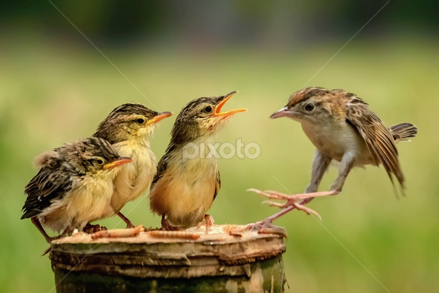 Touch·down by Husada Loy - Animals Birds