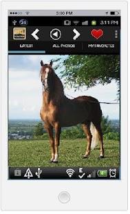 玩免費娛樂APP|下載馬和小馬壁紙高清 app不用錢|硬是要APP
