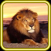 Lion Savanna Wild HD LWP