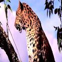 Color Leopard LWP No5 Pro icon