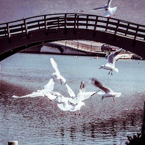 angry birds by Δημήτρης Παπαγεωργίου - Animals Birds