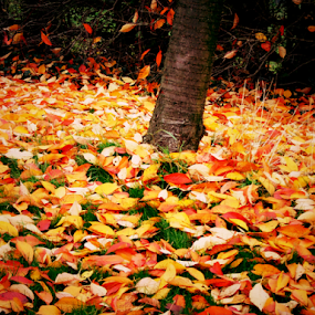 Beginning of fall by Mick Greaves - Nature Up Close Trees & Bushes ( fall leaves on ground, fall leaves, tree, grass, autumn, leaves, fallen leaves,  )