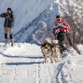 Malamute Day 2014 - Alpe Giumello by Erik Pettinari - Animals Other Mammals ( winter, sleddog, snow, malamute, italy, alps )