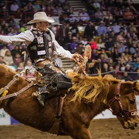 Cort Scheer's Winning Ride In Denver 2014 by Hans Watson - Sports & Fitness Rodeo/Bull Riding (  )
