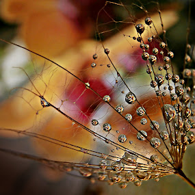 Golden Wishes In Golden Time by Marija Jilek - Nature Up Close Natural Waterdrops