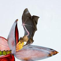 Bat Monitoring Project